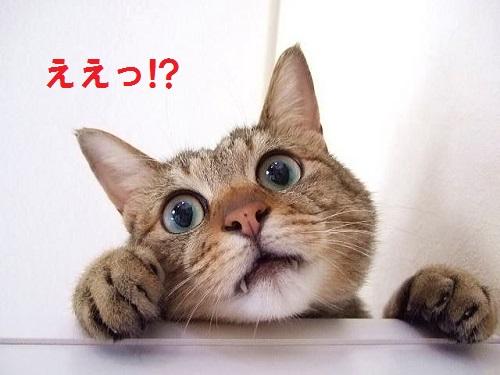 ええっの猫